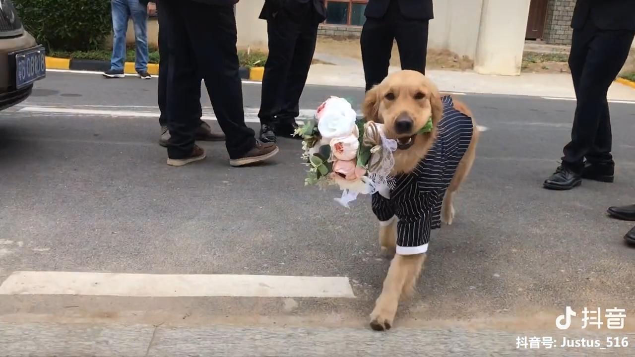 Clip hot thú cưng 12/02: Khi các boss chó trở thành phù dâu và phù rể