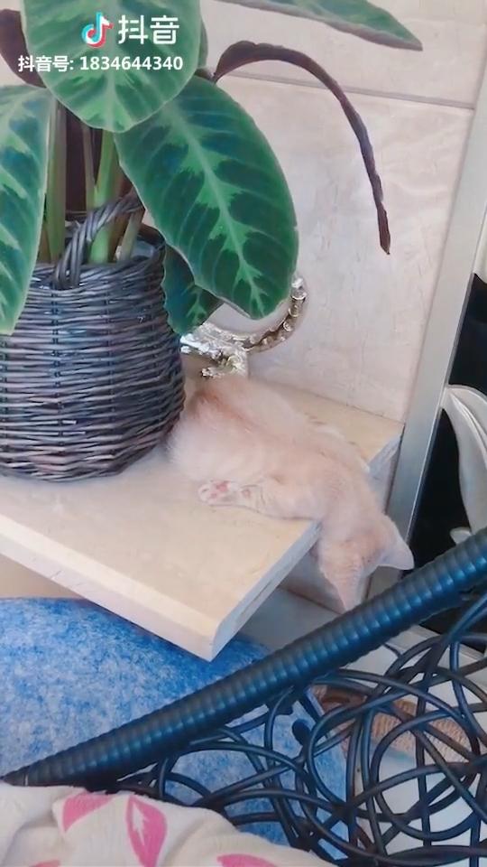 Clip hot thú cưng 20/02: Những nỗi bất đắc dĩ của boss mèo